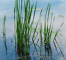 East Harbor State Park - Marshland Grass by MSRowe Art and Design
