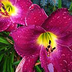 Daylily in The Rain - Rich Plum by MSRowe Art and Design