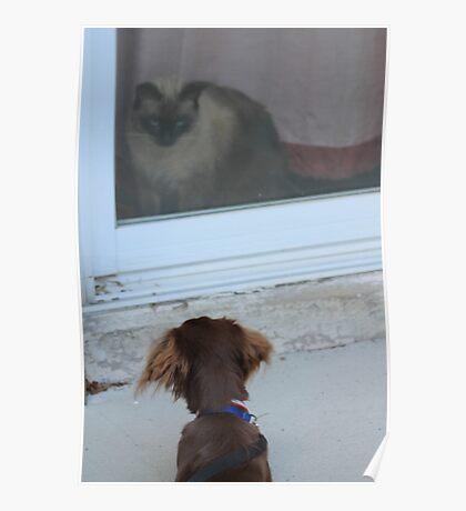 miniture dokken dog and siamese ragdoll cat Poster