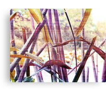 Wetland Reeds - Surreal Color Canvas Print