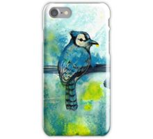 True Blue Jay  iPhone Case/Skin