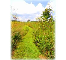 Trail to Summer Photographic Print