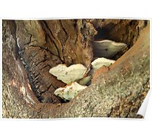 Bracket Fungus in Tree Poster