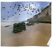 Curlew Dawn Poster