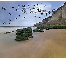 Curlew Dawn Photographic Print