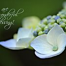 Wonderful Blessing - Card by Tracy Friesen