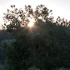Sunrise Through A Tree by frenchfri70x7