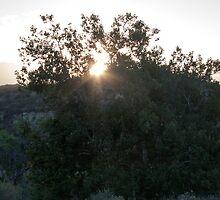 Sunrise Through A Tree by frenchfri70x7