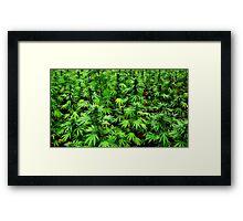 Marijuana (Weed) Framed Print