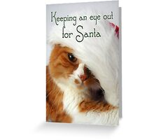 Christmas Cat Keeping an Eye Out for Santa Cat Greeting Card