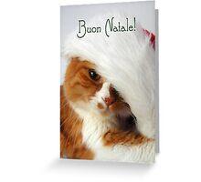 Buon Natale - Christmas Cat in Santa Hat Greeting Card