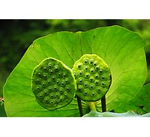 Twin Pods Photographic Print