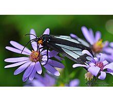Police Car Moth Photographic Print