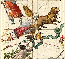Virgo, Hydra, Crater, Bootes, Leo, Centaurus And Other Constellations by VintageLevel