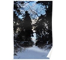 Winter woodland wonerlane Poster