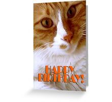 Sweet Cat Happy Birthday Greeting Card
