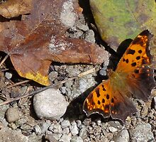 Butterfly and Leaf by Brian Schell