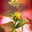 Coneflower yellow bud by RosiLorz