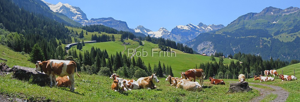 Cows above Wengen by Rob Frith