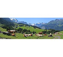 Cows above Wengen Photographic Print