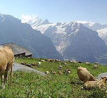 Quintessentially Swiss by Rob Frith