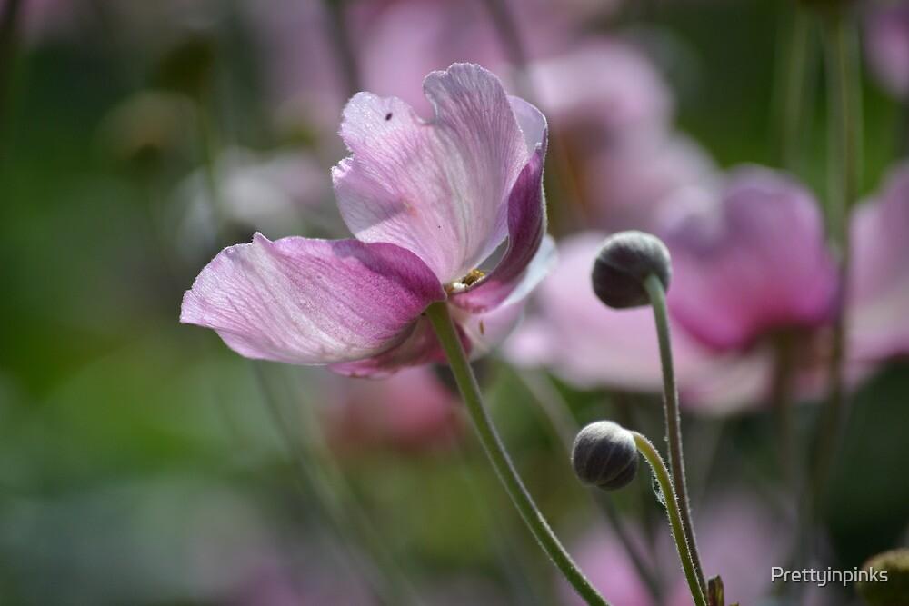 Pink blossom by Prettyinpinks