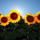 Very Sunny Sunflower by Lisa Holmgreen