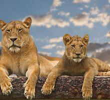 Hangin' With Mama by Jan Cartwright
