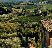 San Gimignano  by Lisa Williams