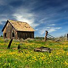Cabin In A Field Of Flowers by James Eddy