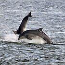 Dolphin again by Steve