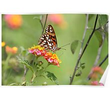 Butterfly on a Flower Covered Bush Poster