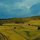 Sicily. Fields II. by Igor Pozdnyakov