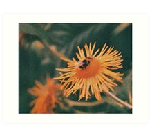 Bumble bee on a flower Art Print