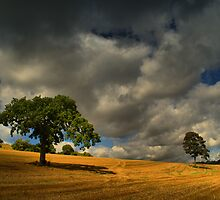 What If All The Grey Clouds In The Sky Follow Me Home Tonight? by Stuart Chapman