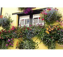 window boxes Photographic Print