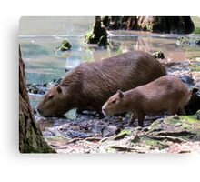 Capybara and Her Baby Canvas Print