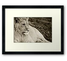 Low and lazy Framed Print