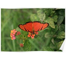 Orange Butterfly Pollinating Flower Poster