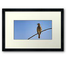 Bird Songs And Blue Skies Framed Print
