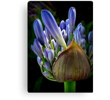 Lily of The Nile Canvas Print