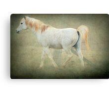 Arab Stallion Canvas Print