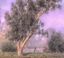 Misty Morn - Jingelic NSW - Upper Murray  - The HDR Experience by Philip Johnson