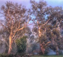 River Gums -  Upper Murray River - Jingelic NSW - The HDR Experience by Philip Johnson