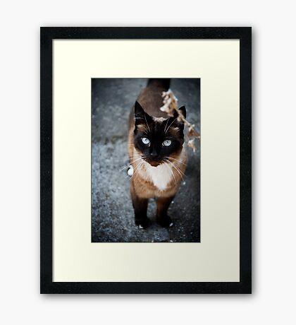 Siamese Framed Print