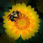 BLUE EYED BEE by Diane Peresie
