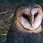 Birds Of Prey Calendar 2015 by naturelover