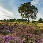 Heather and Hawthorn by Angie Morton