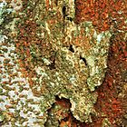 Mottled Tree Bark by debidabble