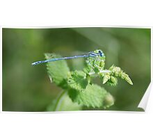 Dragonfly on a Nettle Poster